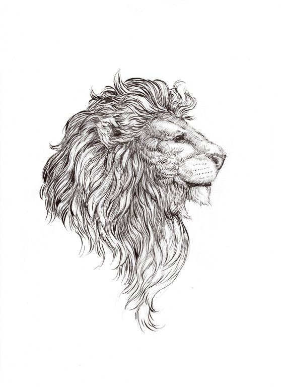 Lion Tattoo Ideas 1 Lion King of the Jungle Tattoo Ideas